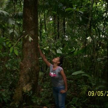 Inspección de campo en Costa bajo de Colon.