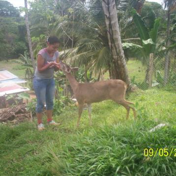 Inspeccion de ampo en Costa Abajo de Colon, criadero de vida silvestre.
